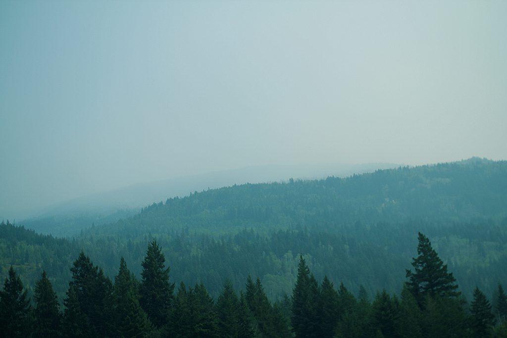 TREESEARCH skog