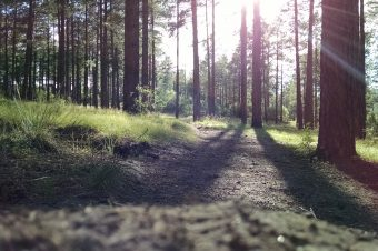 Vinnova stödjer Treesearch med 70 miljoner kronor via BioInnovation